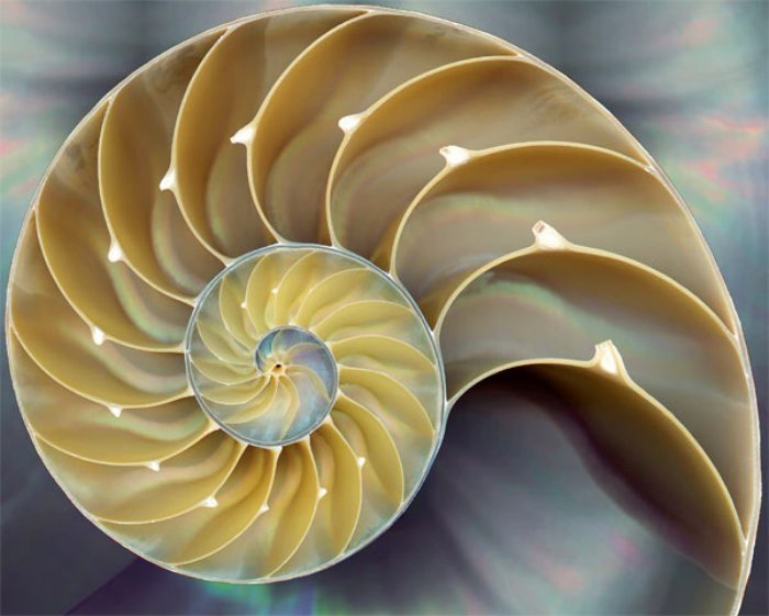 cut cone shell
